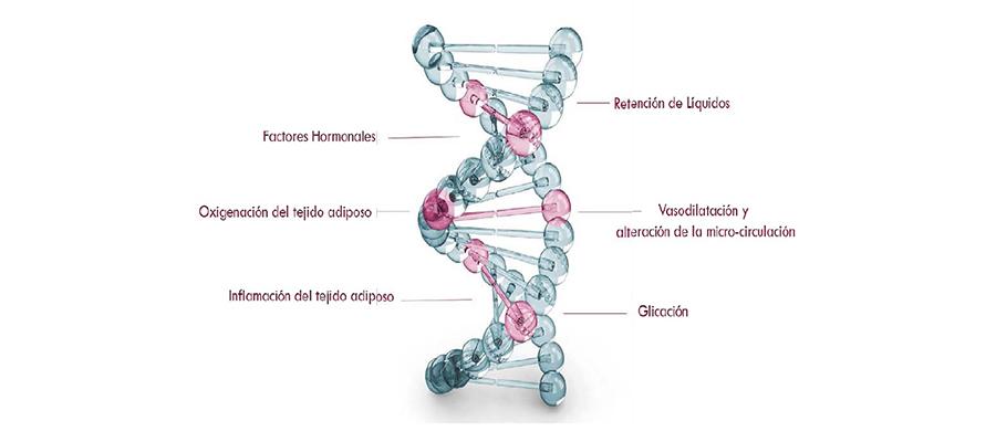 Test adn celulitis genoxage